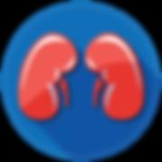 Kidneys-01.png