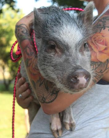 SHARP'S LITTLE PIG TOWN