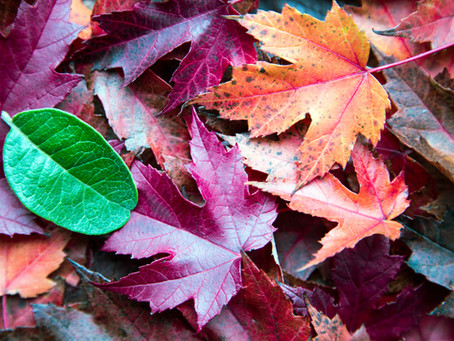 Barvy a roční období