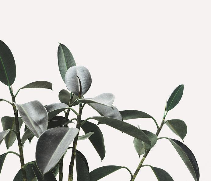 vanessa paletta's yoga room is full of plants