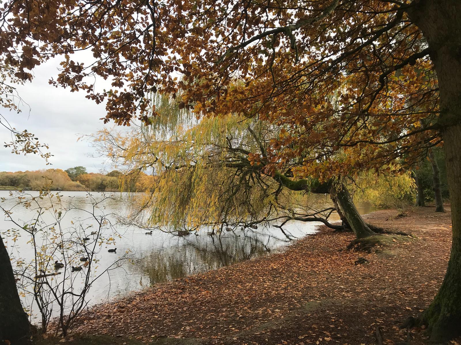 Petersfield Heath Pond