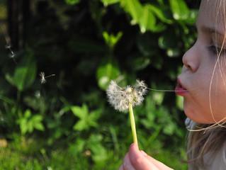 A Happiness Like Wind
