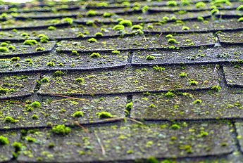 bridge city does roof treatments and moss removal