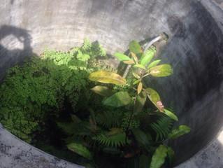Рыба в колодце. Шри-Ланка
