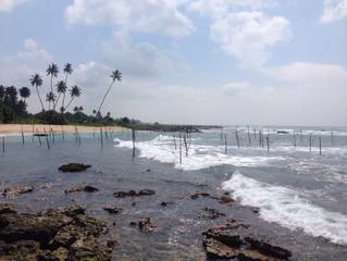 Покинутые насесты. Шри-Ланка