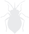 bug_icon.png