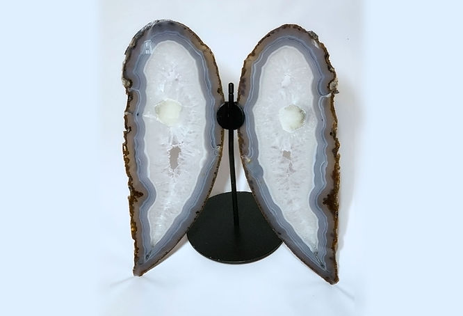 angel-wing-agate-wide.jpg