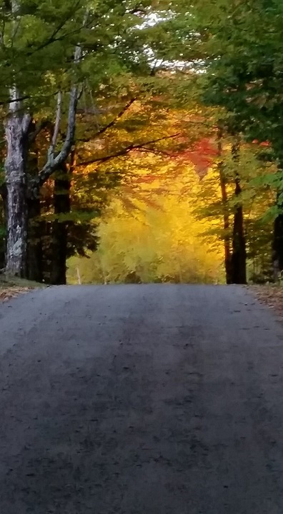 Drive into Autumn