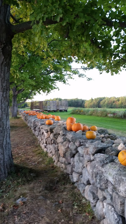 pumpkins muster f