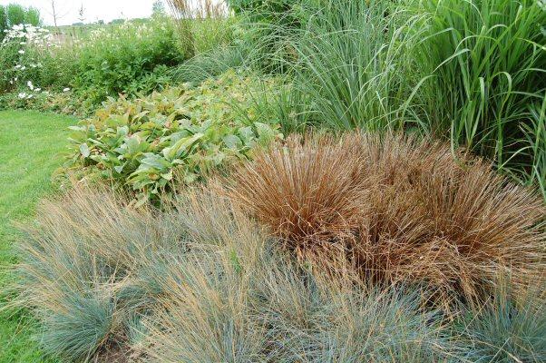 Border met grassen