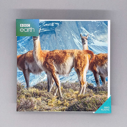 BBC Earth Guanacos Card