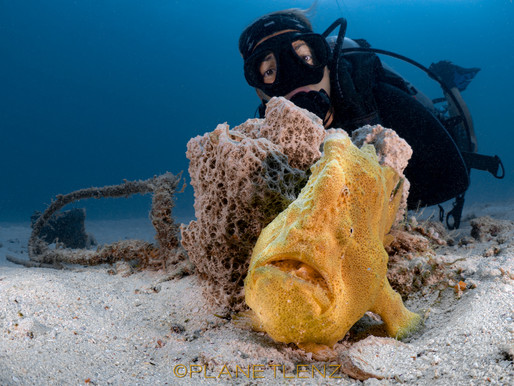 Why Frogfish? - Dealing with A Questionably healthy attraction to Frogfish