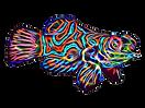 Mandarin fractal cartoon_edited.png