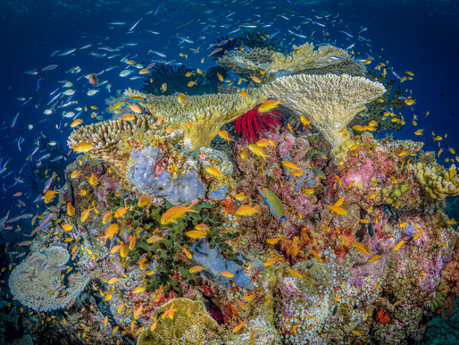 CORAL Reef VALHALLA: The Best coral Reefs in The World - Papua New Guinea