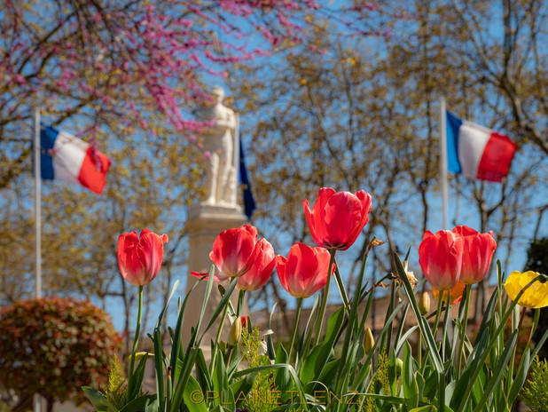 Allez Springtime!