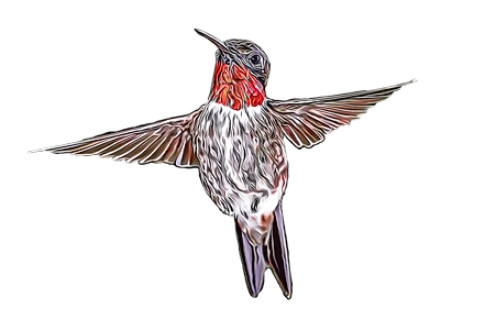 hummingbird%20toon_edited.png
