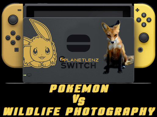 Pokémon and Wildlife Photography Are The Exact Same Thing!