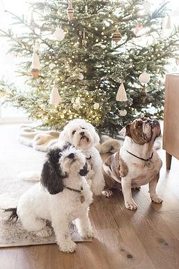Christmas decor ideas for your home
