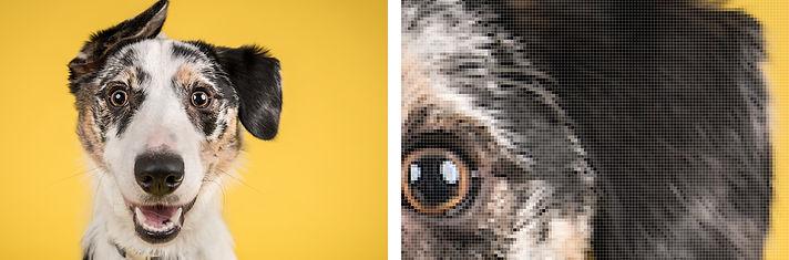 pixel_dog.jpg