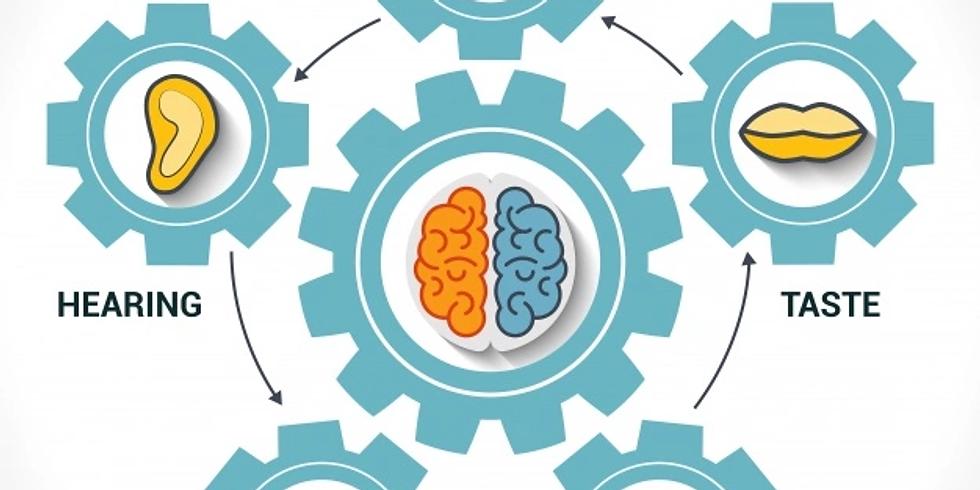 Sistemas sensoriales y aprendizaje desde las Neurociencias