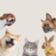 Life of Pets_Square.jpg