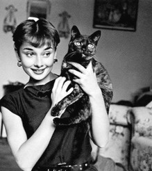 30 Vintage Photos of Old Hollywood Actresses Posing With Their Beloved Cats