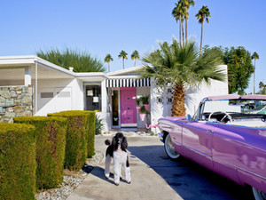 NANCY BARON: PALM SPRINGS, MODERN DOGS AT HOME