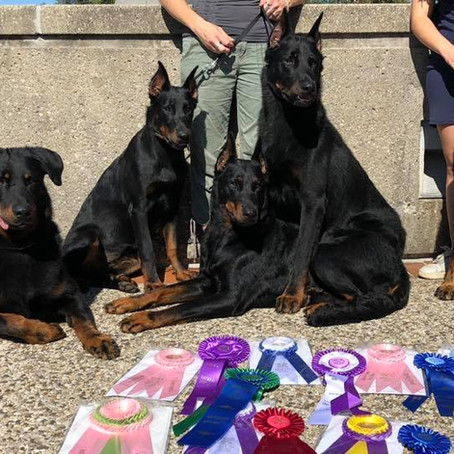 What a week at the USA Beauceron National !!!
