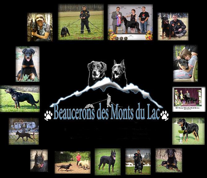 Beauceron breeder beauceron puppies