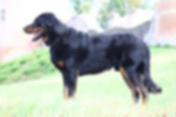 LITTLE SATAN DES MONTS DU LAC - BEAUCERON STUD