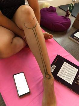 Yoga Teacher Training - Skeletal System