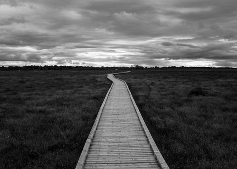 Clara Bog, Ireland