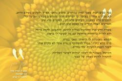 Idan Soha Testimony Designed