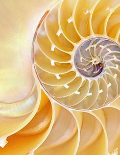 Fib Seq shell pattern 5.jpg