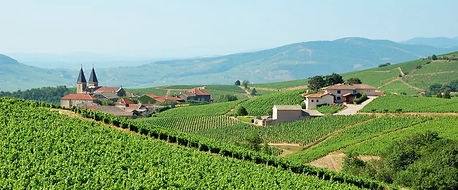 Luxury Small-Group Wine Tours to France and Italy