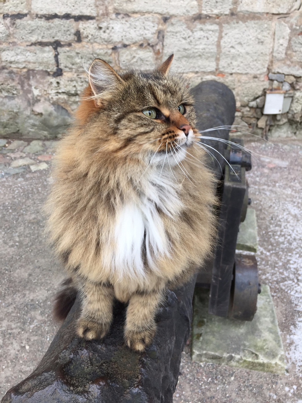 This feline friend keeps us company at the Kuressaare Castle on the island of Saaremaa, Estonia.