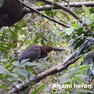 Heron-Agami.jpg