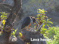Heron-Lave.jpg