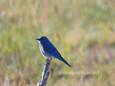 Bluebird Mountain.jpg