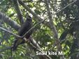 Kite-SnailM.jpg