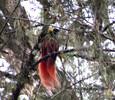 Bird of Paradise - Regina.JPG