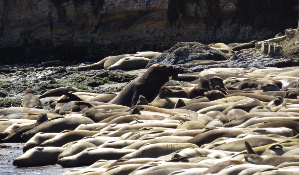 Seal E;ephant.jpg