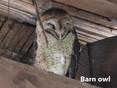 Owl-barn.jpg