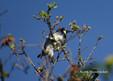Woodpecker - Acorn.JPG