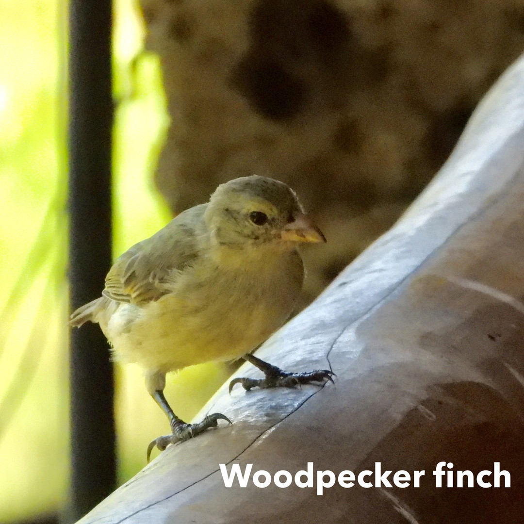 Finch-woodpecker.jpg