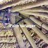 Tanager-Palm.JPG