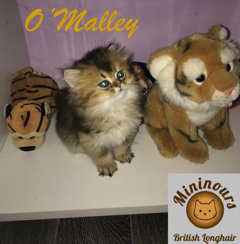O'Malley_5617.JPG