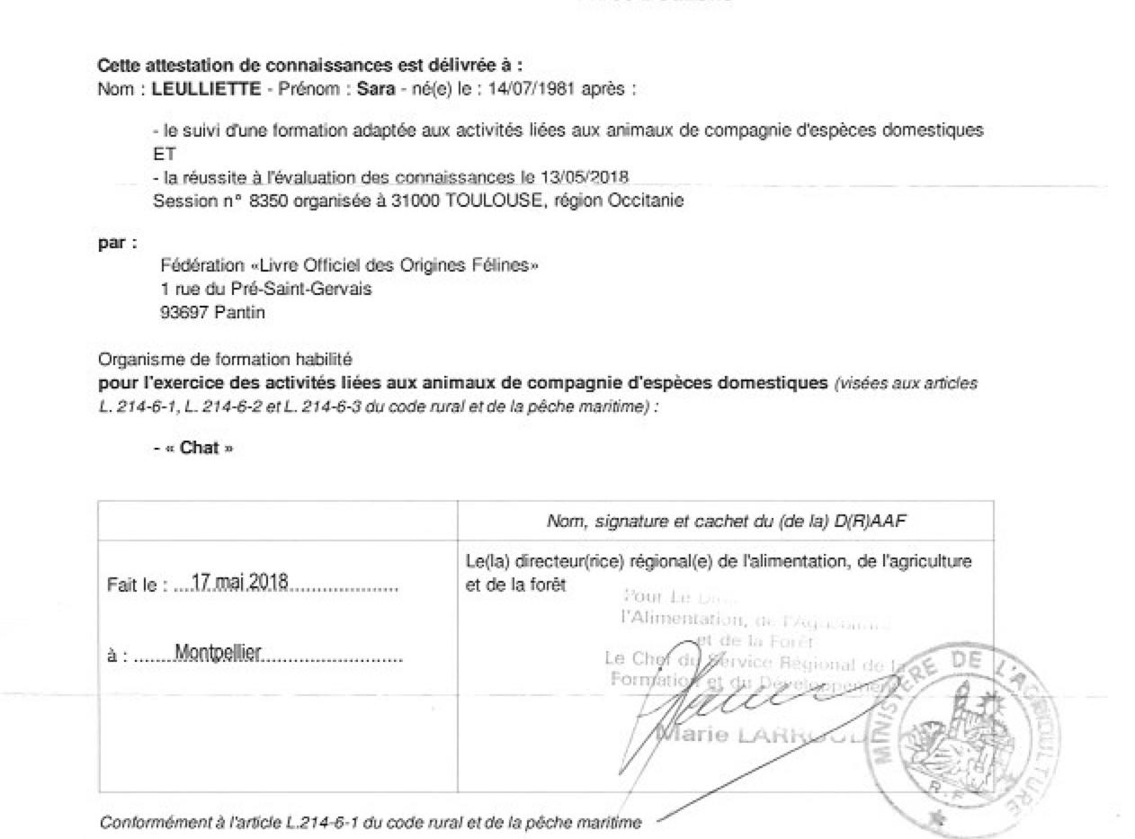 Formation certificat option chat.jpg