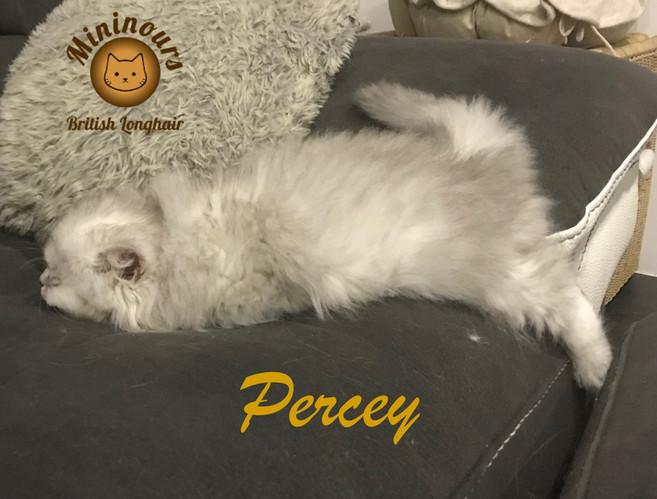 Percey_6651.JPG