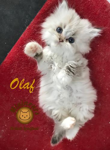 Olaf_5700.JPG